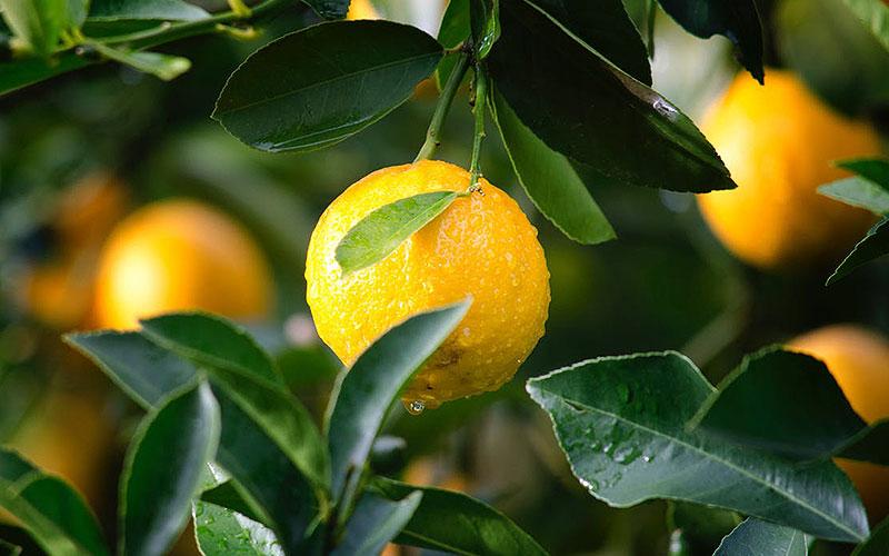 Profundidad de campo en la fotografía de producto limones