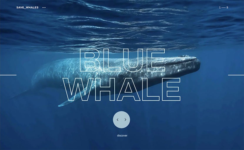 Las 10 mejores webs del verano y tiendas online save whales